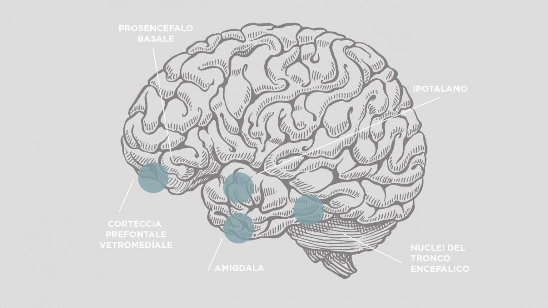 customer-brain